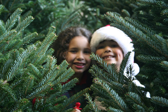 Kids in tree